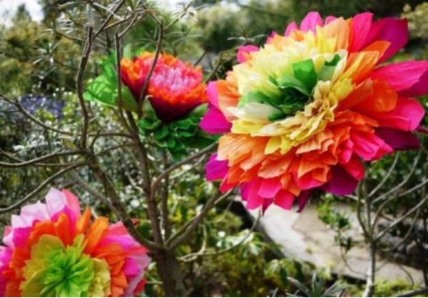 Разноцветные пионы